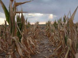 Quali sono gli effetti del riscaldamento globale?