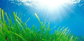 Innovazioni green per l'edilizia: materiali isolanti con alghe marine