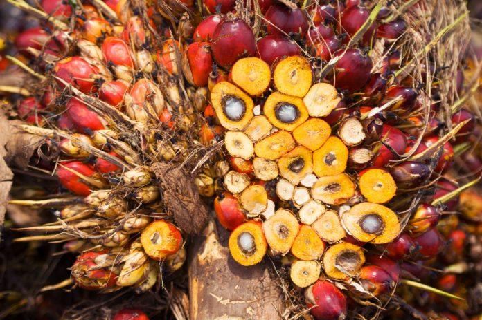 rischi salute e ambiente palma da olio